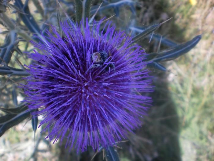 цвет крај планинског језера у србији